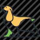 breed, canine, dog, spaniel icon