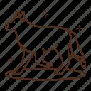 dog, animal, kennel, wolf, walk, walking, exercise icon