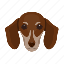 animal, breed, dachshund, dog, domestic, muzzle, pet icon