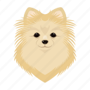 animal, breed, dog, domestic, muzzle, pet, spitz icon