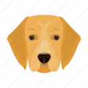 animal, breed, dog, domestic, labrador, muzzle, pet icon