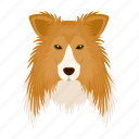 animal, breed, collie, dog, domestic, muzzle, pet icon