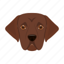animal, breed, dog, domestic, muzzle, pet, setter icon