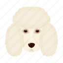animal, breed, dog, domestic, muzzle, pet, poodle icon