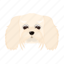 animal, breed, dog, domestic, lapdog, muzzle, pet icon