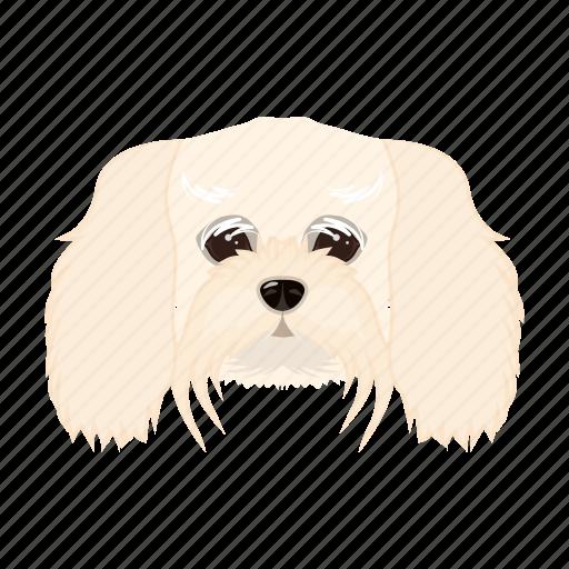 animal, breed, dog, domestic, lapdog, muzzle, pet icon