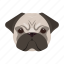 muzzle, pug, pet, breed, domestic, dog, animal