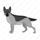 animal, breed, dog, domestic, mammal, pet, shepherd icon