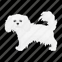 animal, breed, dog, domestic, lapdog, mammal, pet icon