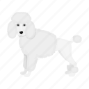 animal, breed, dog, domestic, mammal, pet, poodle icon