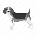 animal, beagle, breed, dog, domestic, mammal, pet icon