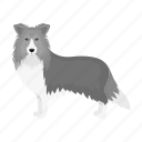 animal, breed, collie, dog, domestic, mammal, pet icon