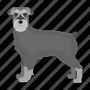 animal, breed, dog, domestic, mammal, pet, rizenschnauzer icon
