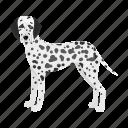 animal, breed, dalmatian, dog, domestic, mammal, pet icon