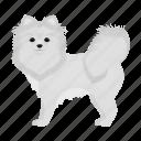 animal, breed, dog, domestic, mammal, pet, spitz icon