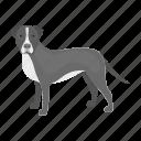 animal, breed, dog, domestic, mammal, pet, staffordshire icon