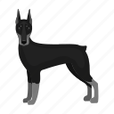 animal, breed, doberman, dog, domestic, mammal, pet