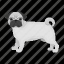 animal, breed, dog, domestic, mammal, pet, pug icon