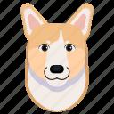 animal, corgi, pet icon