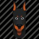 animal, doberman, dog, pet