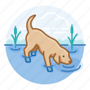 dogs, labrador retiever, pet icon