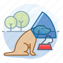 canine, dog, dogs, labrador retriever, pet icon