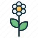flower, plant, spring icon