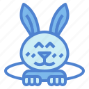 animal, animals, bunny, easter, pet, rabbit
