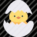 animal, chick, cracked, egg, wildlife icon