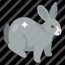 bunny, easter animal, hare, pet animal, rabbit