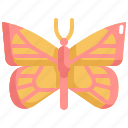 bug, butterfly, garden, insect, nature