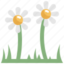daisy, day, decoration, easter, flower, holiday, nature