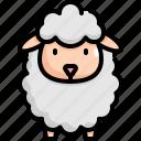 animal, lamb, nature, pet, sheep