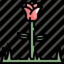 flower, green, love, nature, plant, rose