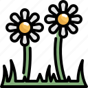 daisy, flower, green, nature, plant, spring