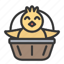 animal, basket, chick, cute, easter