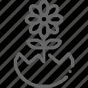daisy, decoration, easter, egg, egg shell, flower