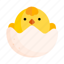 animal, chick, easter, holiday, nature, pet, spring