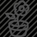 ecological, environment, flower, herb, plant, pot, leaf