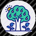 agriculture, chestnut, fruit, horticulture, nut, orchard, tree, ecology, food, nature, orange, plant