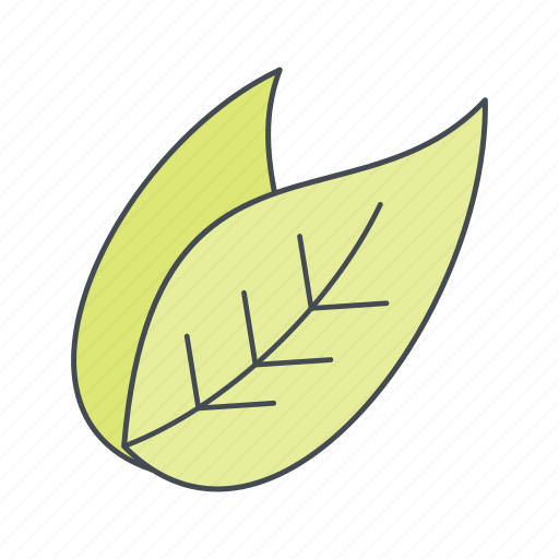 eco, leaves, nature icon