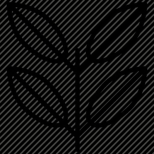 chlorophyll, greening, leaf, leaves, plant icon