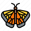 animal, butterfly, ecology, nature
