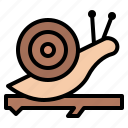 branch, ecology, nature, snail