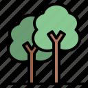 ecology, nature, tree, trees
