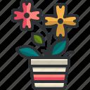flower, pot, garden, botanic, farming