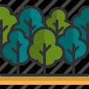 forest, trees, wood, nature, landscape
