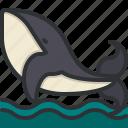 whale, animals, zoo, wild, life, animal, kingdom