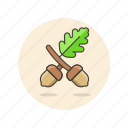 ecology, hazelnut, health, nature, nuts, plant, tree icon