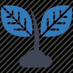 ecology, grow, plant icon